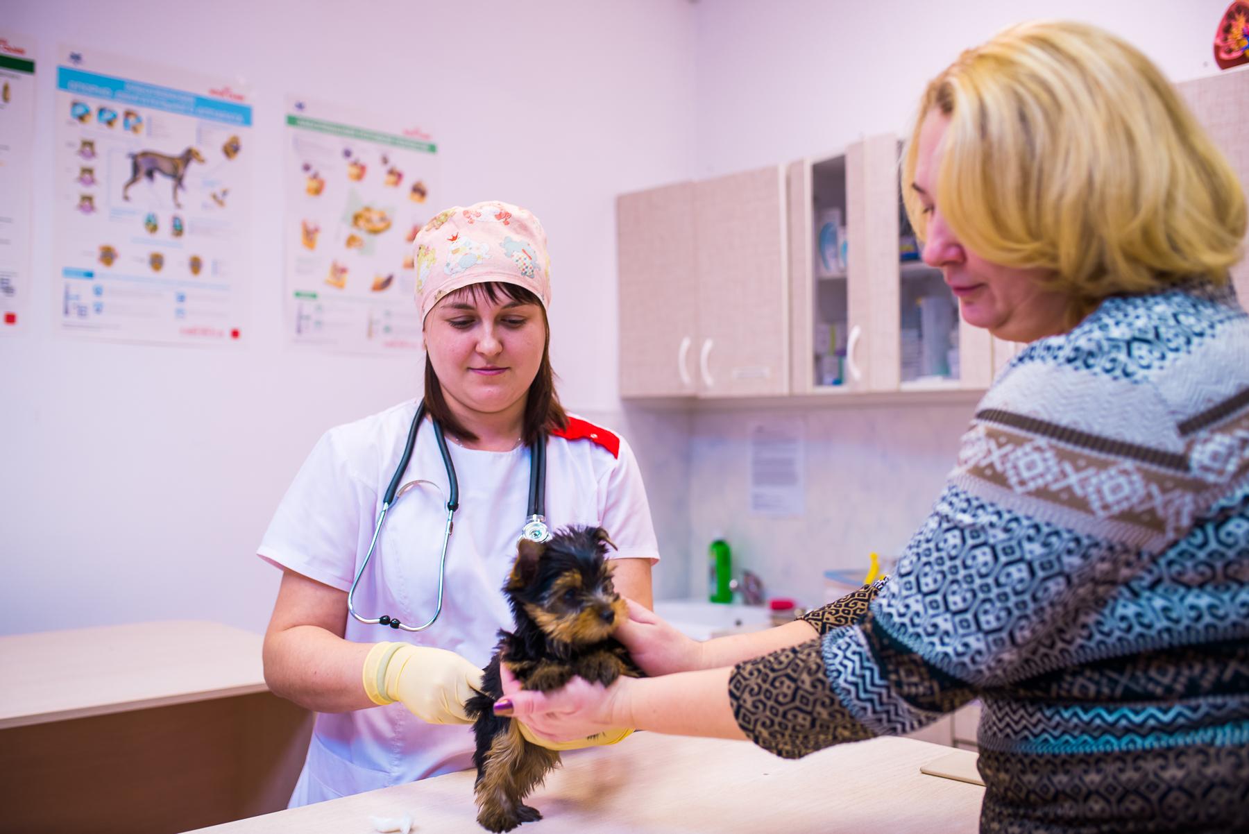 Ветеринарные услуги круглосуточной клиники в г.Красноярск - Амикус